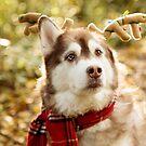 Husky 5 by Rebecca Cozart