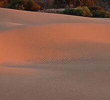 Evening light on the dunes by Peter Hammer