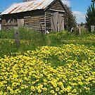 Yellow Daisies Snake Valley by Joe Mortelliti
