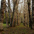 Dando's Camp Otway Ranges by Joe Mortelliti