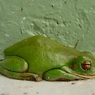Green step frog by jenitae