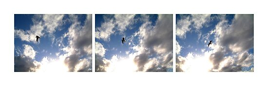 let birds fly above the earth across the expanse of the heavens 2 by Devan Foster