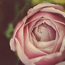 Vintage Rose by karenanderson