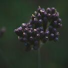Dark Purple weeds by karenanderson