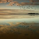 Lake Wollumboola Reflections by Noel Elliot