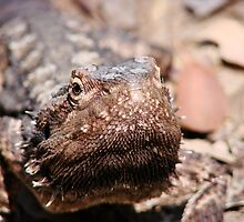 """""""How bout a Kiss"""" Bearded Dragon  by diddle"""