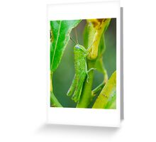 Baby Green Hopper Greeting Card