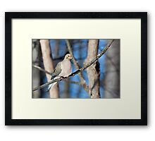 Mourning Dove in the Woods Framed Print