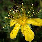 A Yellow Flower by Ben Loveday