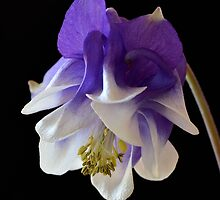 Purple and White by Karine Radcliffe