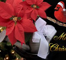 ✰。POINSETTIA AND CARDINAL CHRISTMAS PICTURE/CARD✰。 by ✿✿ Bonita ✿✿ ђєℓℓσ