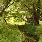 Secret Garden I by Joel  Haldane