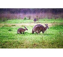 Soggy Roos Photographic Print