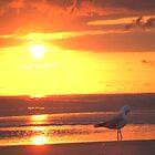 Lone gull at dawn by Cathie Sherwood