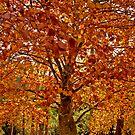 Autumn  by Andrew Bosman