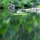 Green Reflections by John Barratt