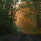 Sun Rays Through A Woodland Backroad In Fall by Geno Rugh