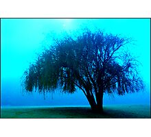 Willow tree blue Photographic Print