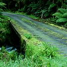 Cianco Creek,Otway Ranges by Joe Mortelliti