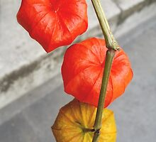 Floral Chinese Lanterns by Vanessa  Warren