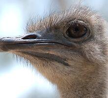 Big Bird by Craig Goldsmith