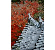 Roof over the red forest Photographic Print