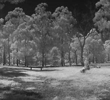 Wattle Park in infrared by David Burren