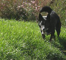 Fetch by noahs