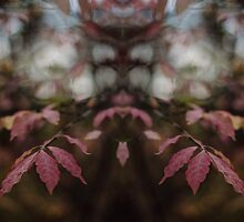 Autumnal Rorschach by Bethany Helzer