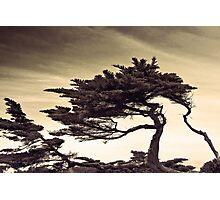 autechre trees Photographic Print