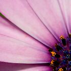 Purple flower by AquaMarina