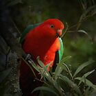 KING PARROT II by hugo