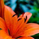 flower by venkman