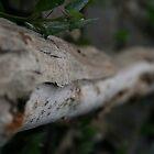 leaf by Patrick Keevil