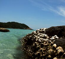 Dead Corals by the beach by zoule