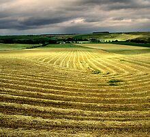 The Hay Field by Hans Kawitzki