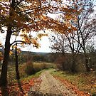 The Autumn Trail by TrendleEllwood
