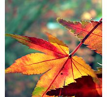 Softly Fall II Photographic Print