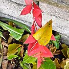 Red Leaves against a brick wall by Shulie1