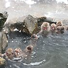 Snow monkeys by Rhona