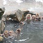 Snow monkeys by Rhona