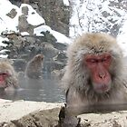 Snow monkey by Rhona