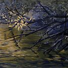 Pond Reflections by Michael Beckett