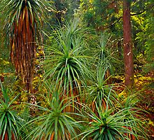 Pandanus - Pine Valley - Tasmania by James Pierce