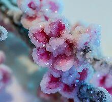 Cherry Blossoms Crystallized  by elenakulikova