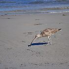 WOY WADING BIRD by David McDougall