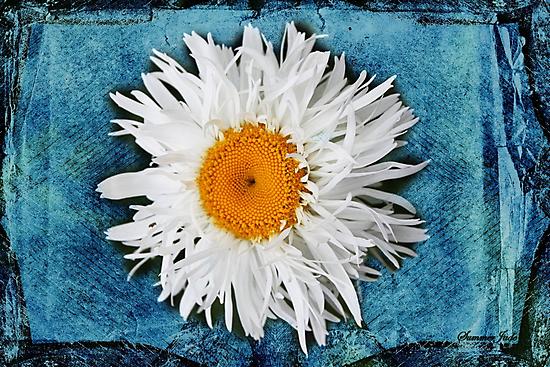 Daisy on Denim by SummerJade