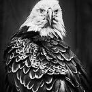 American Eagle by Lasse Damgaard