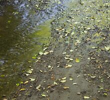 Renfrew Ravine - leaves on creek bank by Rod Raglin