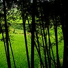 Grass through Trees by Christina Tang
